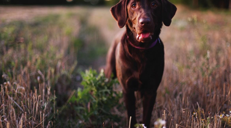 R.A.D.dog Training & Walking